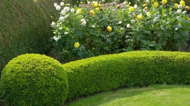 Uncovering The Advantages Of Adding A Garden Hedge