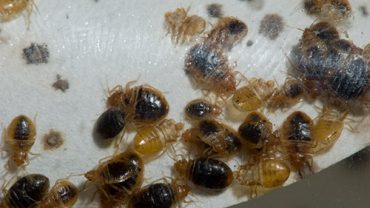Top 5 Tips To Prevent or Control Bed Bugs