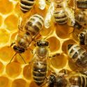 How To Get Rid Of Bees Naturally?