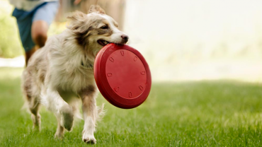 5 Bad Foods That Your Dog Should Not Consume