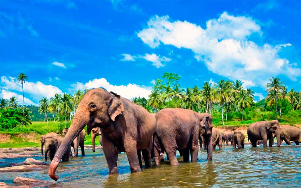3 Tips For First-Time Travellers To Sri Lanka